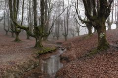 Otzarreta forest in gorbea natural park, basque country. Spain. Colorful autumn at otzarreta forest in gorbea natural park, basque country. Spain royalty free stock photography