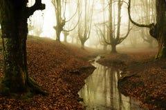 Otzarreta forest in gorbea natural park, basque country. Spain. Colorful autumn at otzarreta forest in gorbea natural park, basque country. Spain royalty free stock image