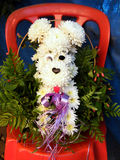 Ou chien de chrysanthème de Yehuda sur une chaise rouge 2010 Photographie stock libre de droits