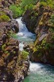 Ou-Débarrassez des plants peu vigoureux la gorge de crique de Traîner-Mule de fleuve Images libres de droits