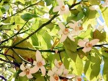 Ou fleur 2011 de Yehuda Grapefruit Images libres de droits