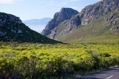 Ou Kaapse Weg della riserva naturale di Silvermine Immagini Stock