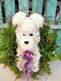 Ou Yehuda le bouquet 2010 de chien de chrysanthème Image stock