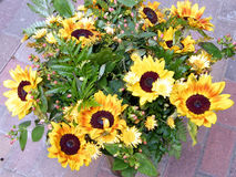 Ou Yehuda le bouquet des tournesols 2010 Photo libre de droits