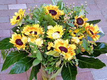 Ou Yehuda le bouquet du tournesol 2010 Photo stock