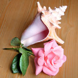 Ou Yehuda Rose et mer Shell 2010 Photographie stock