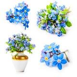 Oubliez-moi pas des fleurs Photo stock