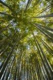 Oud bamboebos Royalty-vrije Stock Afbeelding