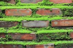 Oud beton Royalty-vrije Stock Fotografie