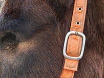 Oud blind paard Paard zonder oogbal royalty-vrije stock afbeeldingen