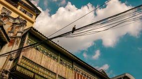 Oud Blokhuis met een Vogel op Elektrische Draden - Heldere Clou stock fotografie