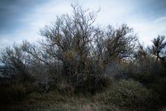 Oud boomsilhouet onder grijze hemel Stock Afbeelding