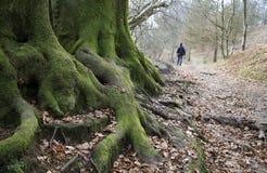 Oud bos Stock Foto's