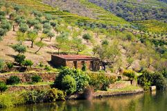 Oud buitenhuis door de rivier - Douro-rivier stock foto's