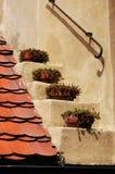 Oud dak Stock Afbeelding