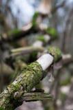 Oud die drijfhout met mos wordt behandeld Royalty-vrije Stock Afbeeldingen