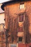 Oud die huis door klimop in de stad van Rome wordt behandeld Italië Royalty-vrije Stock Foto