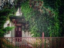 Oud die huis volledig met klimop wordt overwoekerd Stock Foto's