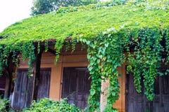Oud die Huisdak met wijnstokken en bomen wordt behandeld Royalty-vrije Stock Foto's