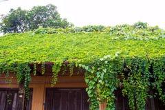 Oud die Huisdak met wijnstokken en bomen wordt behandeld Stock Afbeelding