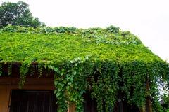 Oud die Huisdak met wijnstokken en bomen wordt behandeld Royalty-vrije Stock Foto