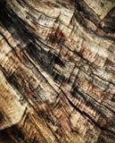 Oud doorstaan hout zonder schors Stock Foto