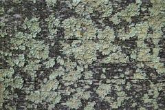 Oud doorstaan op het grijze houten logboek met mos stock afbeeldingen