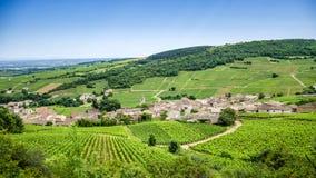 Oud dorp met wijngaarden Stock Afbeelding