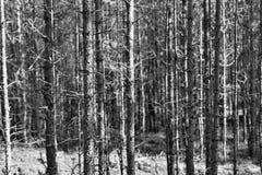Oud droog hout van zwart-wit toon Stock Foto's