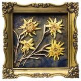 Oud edelweiss Stock Afbeeldingen
