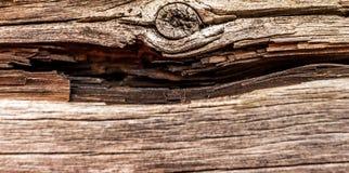 Oud en droog woodden raad Stock Afbeelding