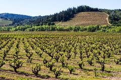 Oud en Nieuw: De Vernieuwing van het wijnland royalty-vrije stock foto's