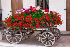 Oud-Fashined karretje met geranuim Stock Fotografie