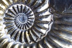 Oud Fossiel royalty-vrije stock foto