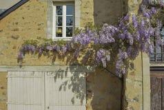 Oud Frans Huis met het beklimmen van wisteria op de muur Parijs Royalty-vrije Stock Fotografie
