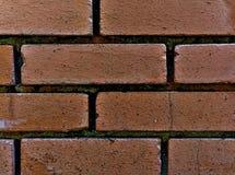 Oud geweven bakstenen muurdetail met mos stock foto