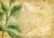 Oud geweven document met waterverfbladeren Stock Afbeeldingen