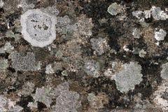 Oud graniet met korstmossen royalty-vrije stock fotografie
