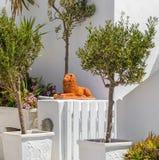 Oud Grieks Standbeeld van leeuw op Santorini-eiland in Oia stad Stock Foto