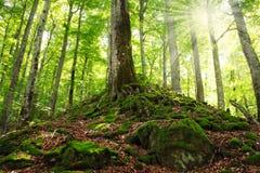Oud groen bemost bos royalty-vrije stock afbeeldingen