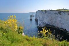 Oud Harry Rocks, witte die klippen op Handfast-punt dichtbij Swanage worden gevestigd Royalty-vrije Stock Afbeelding