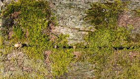 Oud hout met mos stock afbeeldingen