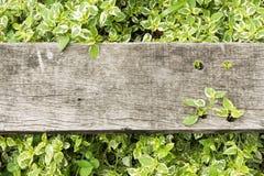 Oud hout op bladachtergrond stock afbeeldingen