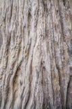 Oud houten patroon Stock Foto