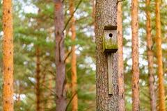 Oud houten starling-huis op de macromening van de pijnboomboom royalty-vrije stock fotografie