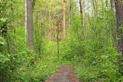 Oud houten voetpad in een dicht bosvolyn-gebied ukraine Royalty-vrije Stock Fotografie