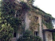 Oud huis in klimop royalty-vrije stock afbeelding