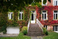 Oud huis met de herfstbladeren op de muur Royalty-vrije Stock Afbeelding