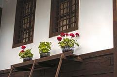 Oud huis met potten van bloemen Stock Foto's