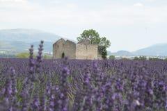 Oud huis op een de lavendelgebied van de Provence Royalty-vrije Stock Afbeeldingen